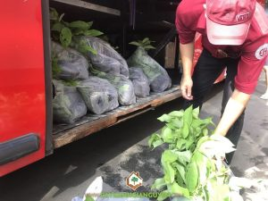 Cây na dai, Cây giống na dai, Vườn ươm Cây Xanh Gia Nguyễn, Trồng cây na dai, Cây ăn trái