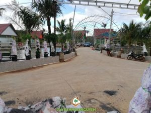 Vườn ươm Cây Xanh Gia Nguyễn, Công ty Nguyên Thành Phát, Cây giống, Cây phúc lọc thọ, Cây bông giấy, Cây sứ quân tử