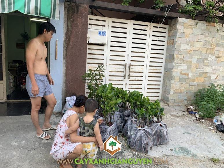 Cây Mít Ruột Đỏ, Giống Mít, Giống Mít Ruột Đỏ, Vườn ươm Cây Xanh Gia Nguyễn, Mít Ruột Đỏ
