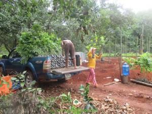 Công ty cây xanh Gia Nguyễn, cung cấp cây giống, cây sưa đỏ, cây giống, vườn ươm cây giống