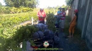 Cây xanh Gia Nguyễn, Cây cẩm lai, Cây giáng hương, Cây giống lâm nghiệp, Cây ăn trái