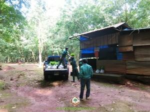Vườn ươm Cây Xanh Gia Nguyễn, Cây keo lai BV32, Chăm sóc cây, Cao su, Cây lâm nghiệp